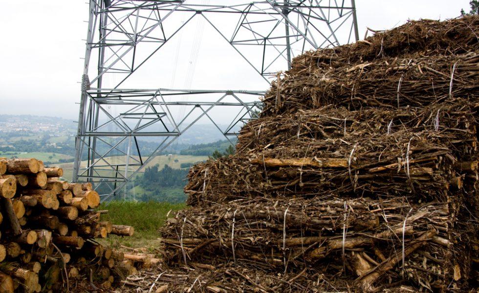 La generación eléctrica con biomasa en la transición energética española
