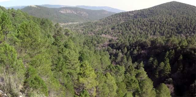Las tareas de prevención de incendios permiten aprovechar la biomasa extraída de los montes
