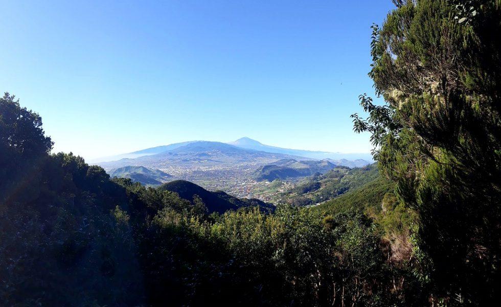 Papel de los ingenieros de montes e ingenieros técnicos forestales en Canarias de cara a la recuperación post-crisis COVID-19