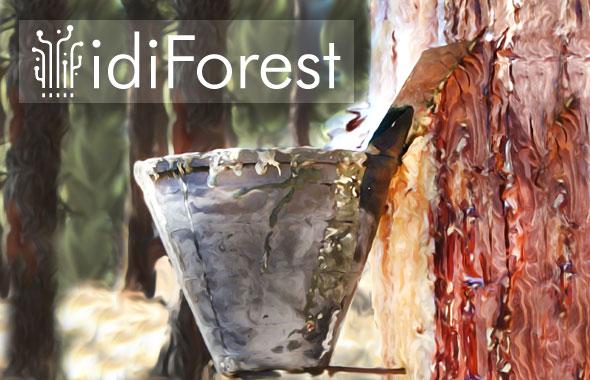 Las jornadas idiForest se celebrarán en septiembre