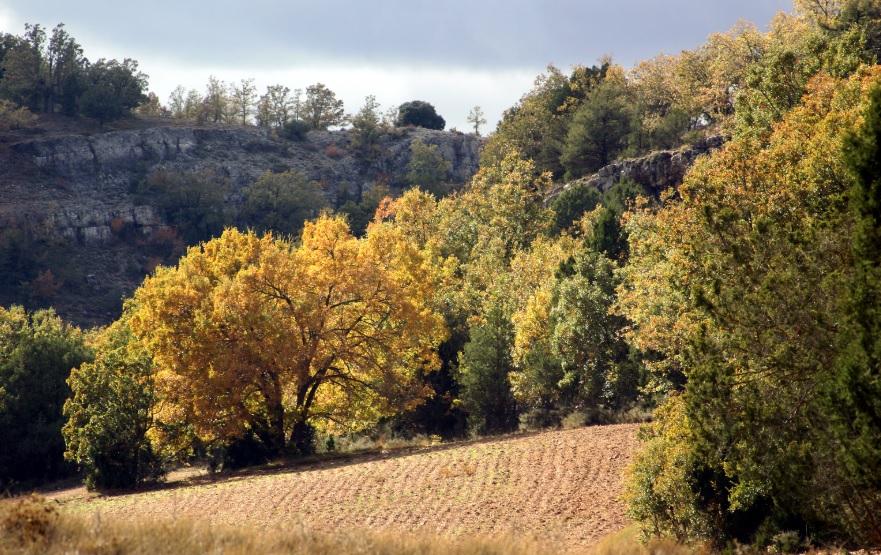 Soria reducirá la vulnerabilidad de los bosques frente al cambio climático