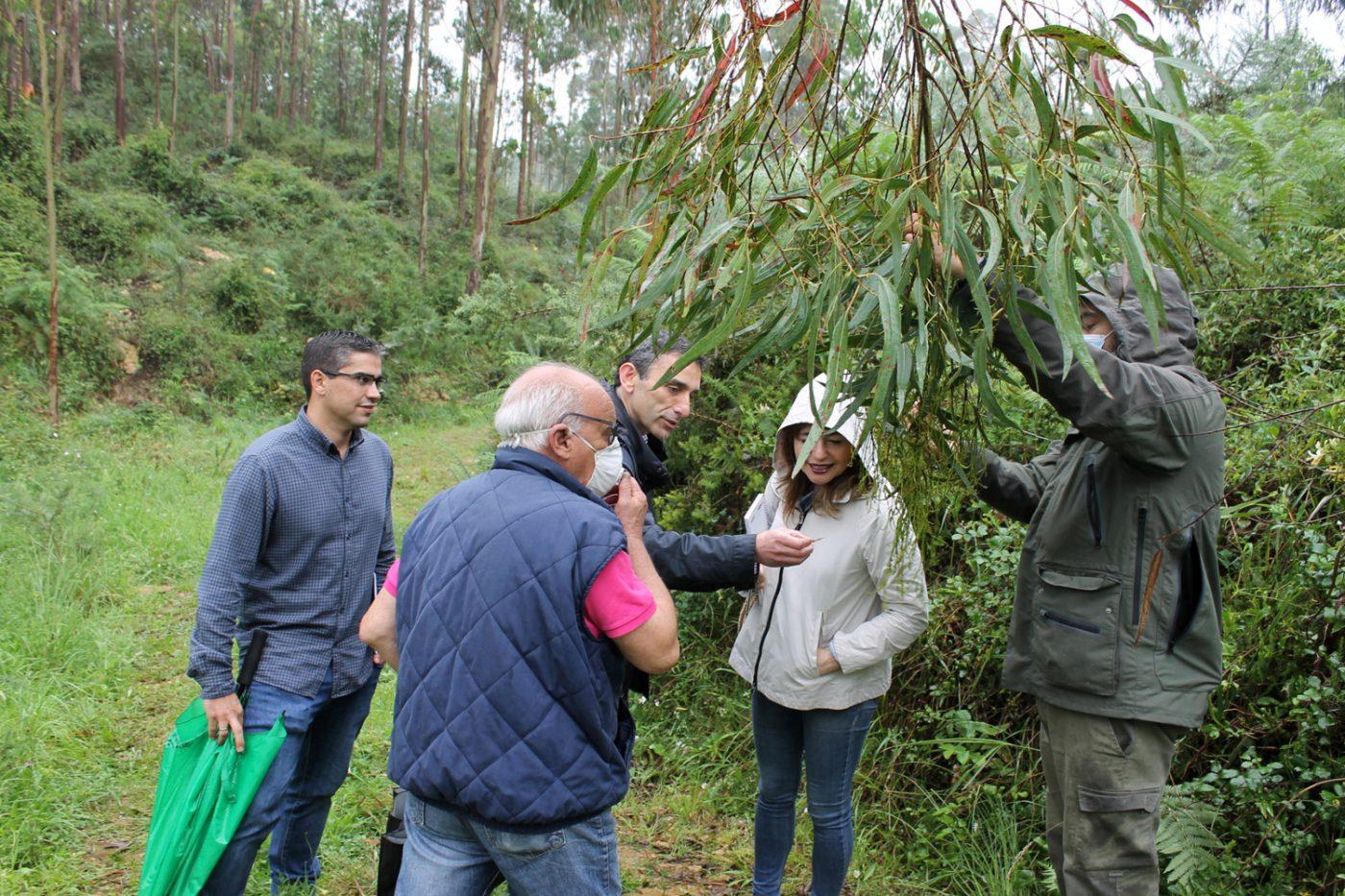 Jornada de formación a propietarios forestales de Cantabria sobre lucha biológica frente al gorgojo del eucalipto