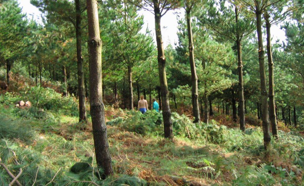 """""""Es hora de alcanzar un gran Pacto de Estado por los Bosques"""""""