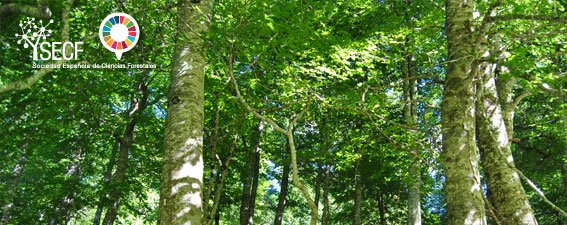 La Ciencia Forestal y su contribución a los Objetivos de Desarrollo Sostenible