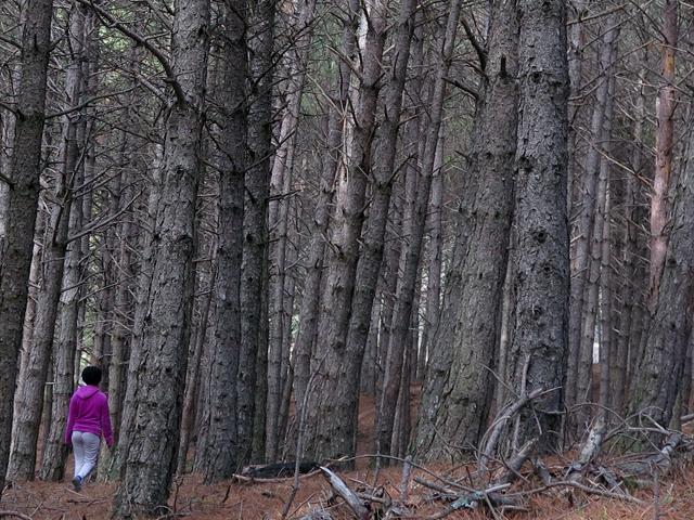 El sector forestal debe estar en el Pacto por la reconstrucción de Castilla y León