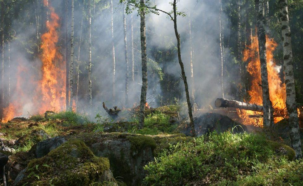 La deforestación, detrás de incendios y pandemias