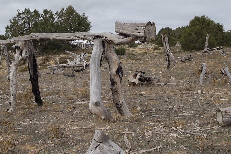 Los troncosaurios, un gran museo al aire libre con madera de sabina