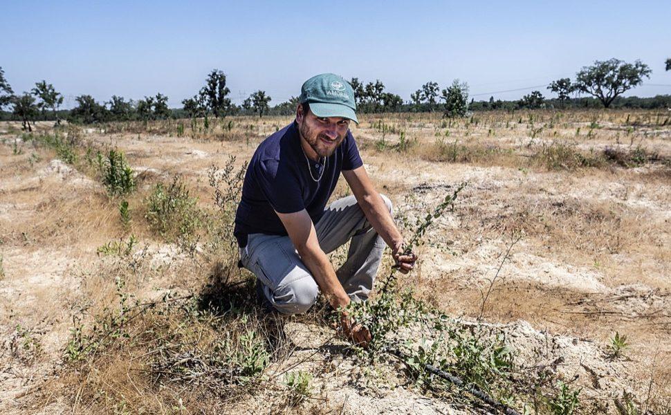 AMORIM planta 1.750 hectáreas de alcornocal e innova en el descorche
