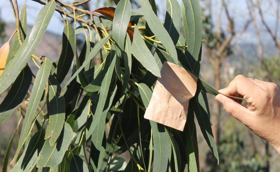 Actuar de forma rápida y en el momento oportuno es muy importante para abordar con eficacia el problema de las plagas forestales