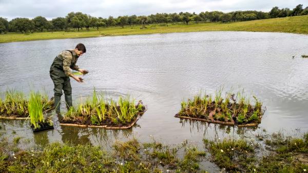 Islas de corcho natural en una explotación agrícola