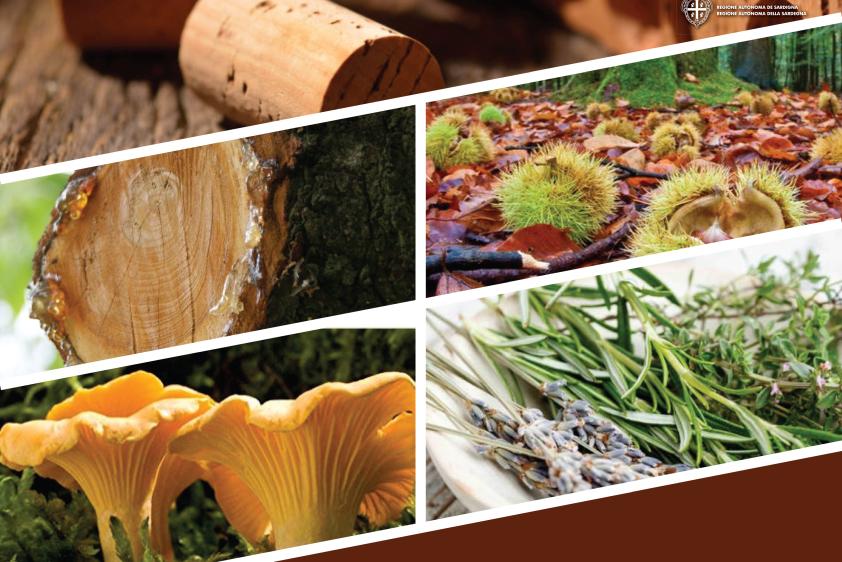 idiForest: Innovación y tecnologías emergentes para productos forestales no maderables