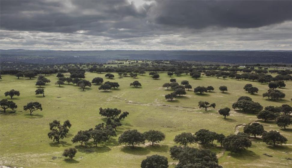 Extremadura duplica la superficie de monte con certificación PEFC superando ya las 100.000 hectáreas