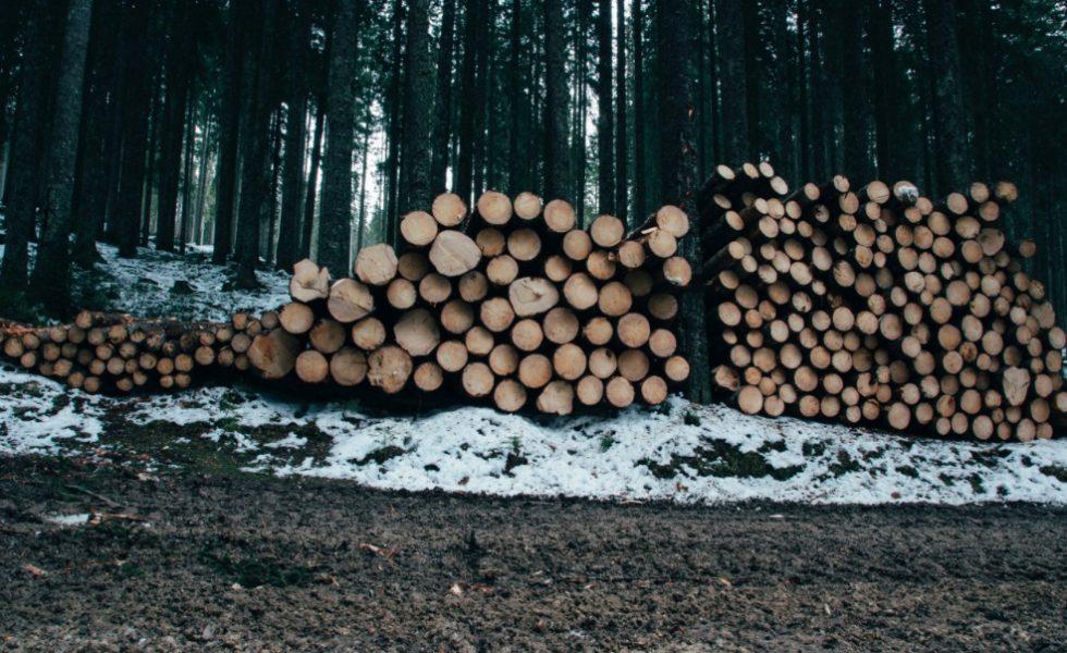 Se disparan las adjudicaciones desiertas de madera de montes públicos