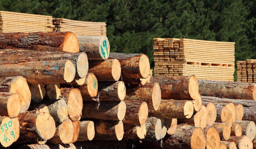 El precio de la madera aumentó en el cuarto trimestre de 2020