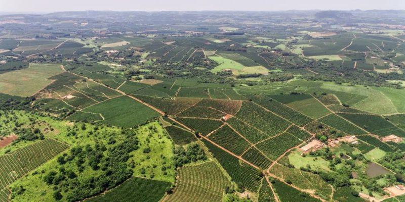 La falta de rentabilidad y el minifundio, principales causas del abandono forestal