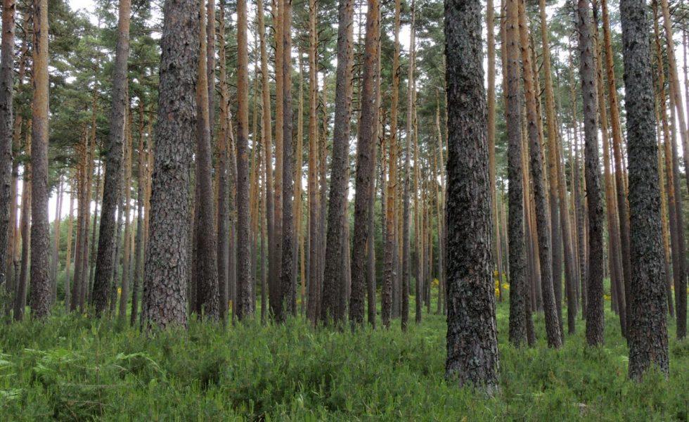Las industrias europeas de la madera acogen con satisfacción el informe del Parlamento sobre el futuro de la Estrategia Forestal de la UE