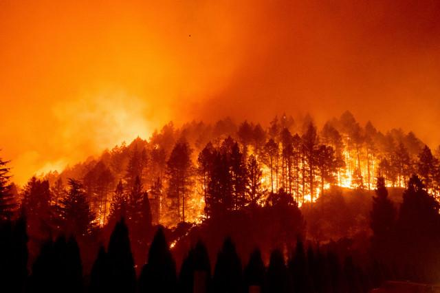 Nuestros bosques, ¿listos para arder?