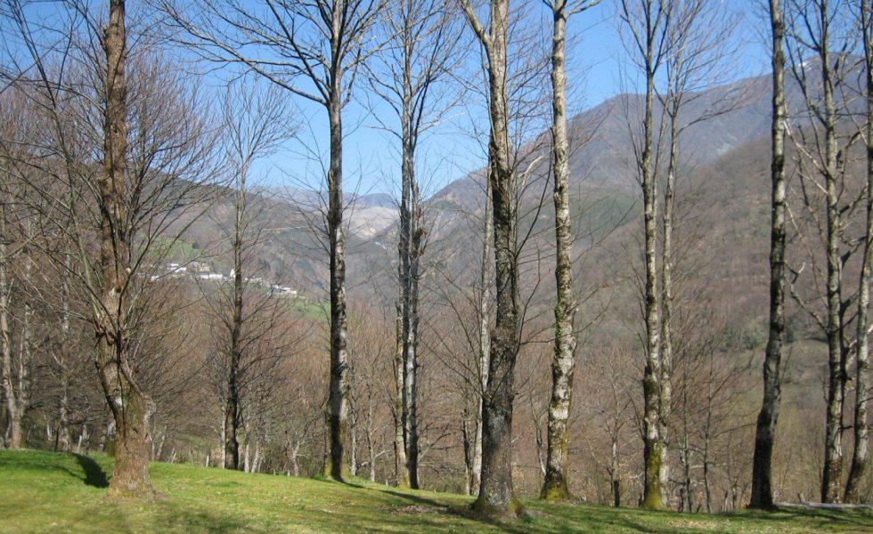 Presentadas las conclusiones de la 1ª jornada Pre Congreso de la Propiedad Forestal