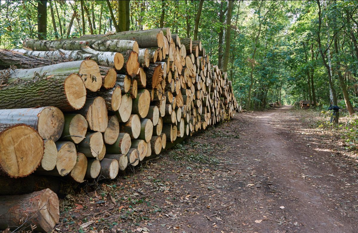 ITENE y Mulleres Rurais de Galicia organizan tres cursos de valorización de biomasa forestal
