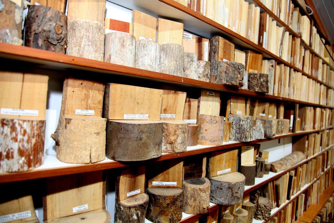 Denia alberga la xiloteca más grande de España, con más de 4.200 muestras