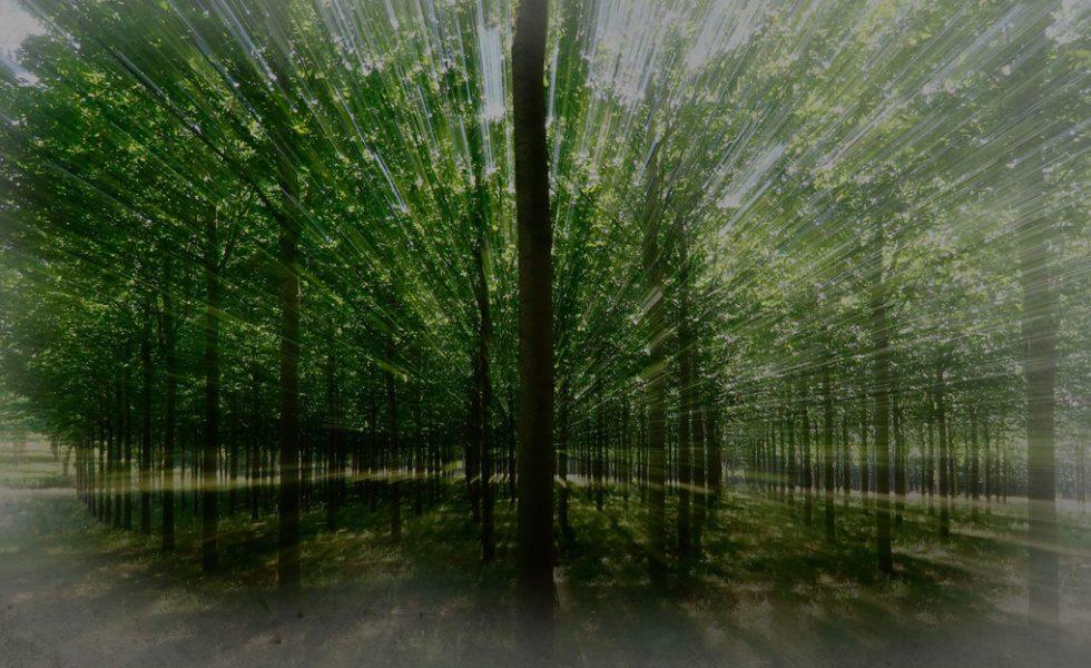 Usar madera de plantaciones beneficia al medio ambiente