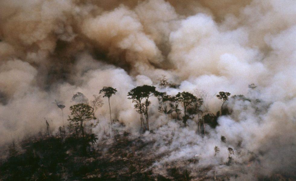 """WWF publica su informe sobre """"Frentes de Deforestación"""""""