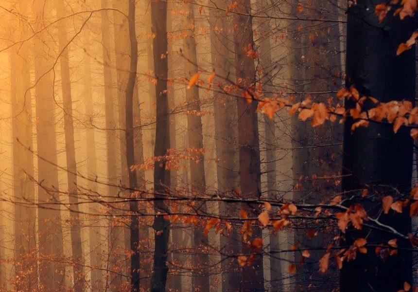 La superficie forestal europea aumentó un 9% en los últimos 30 años