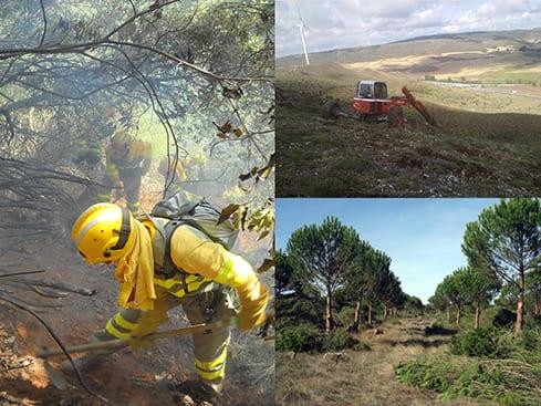 ¿Por qué Ayuso no apoya a las empresas forestales?