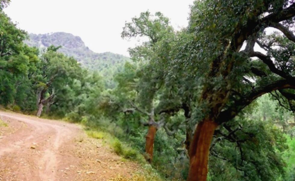 El corcho, el recurso natural por excelencia de la Sierra de Espadán