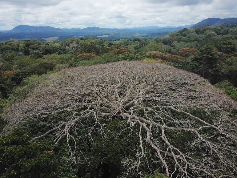 Los bosques centroafricanos son vulnerables al cambio global
