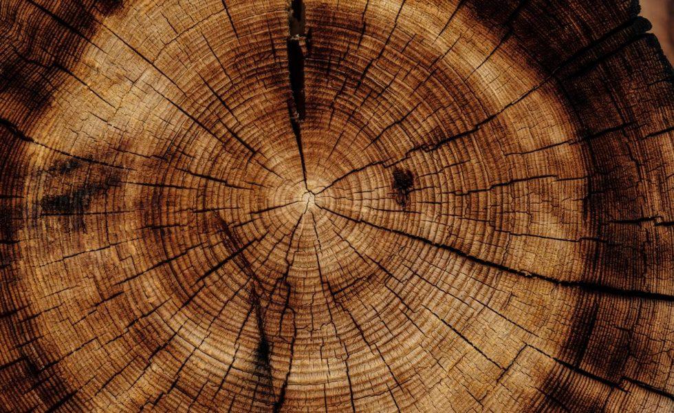 La gestión eficiente de recursos en la industria de la madera