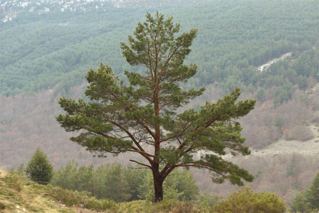 COSE confía en que la nueva Ley de Cambio Climático compense a los propietarios forestales por su contribución a la absorción de CO2