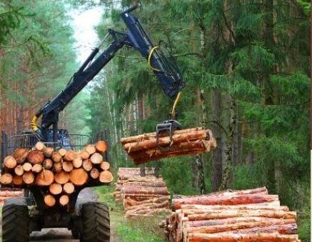 Falta madera en el mercado ante el progresivo descenso en las licitaciones de montes públicos
