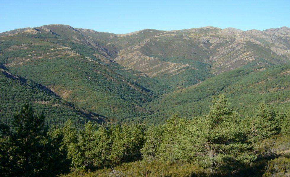 La Junta de Castilla-La Mancha destina 769.000€ a mejorar los montes de Guadalajara