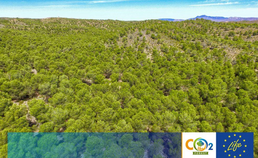 El proyecto LIFE FOREST CO2 amplía su camino hasta junio de 2021