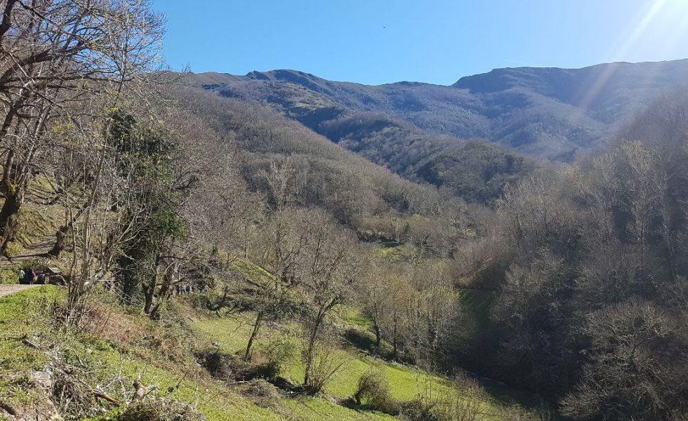 AGROAMB,  primera empresa española en patrocinar servicios ecosistémicos de un bosque FSC