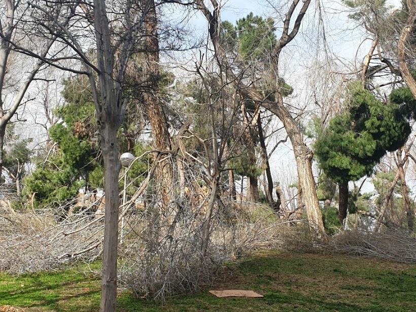 Ingenieros Agrícolas y Forestales alertan de la inadecuada gestión en el arbolado urbano