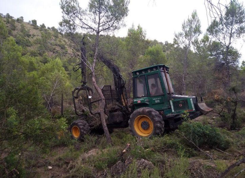 Life Forest CO2 finaliza su camino con grandes logros para el sector forestal