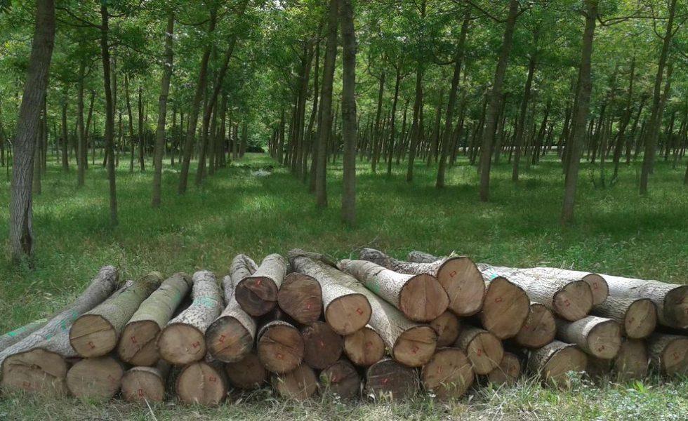 WOODNA Maderas Naturales tiene madera