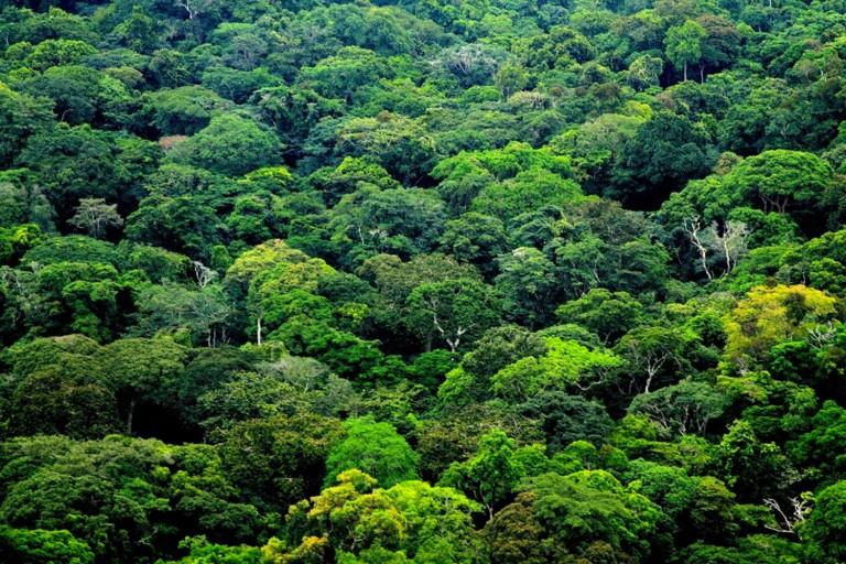 Gabón, premiado por sus esfuerzos para proteger sus bosques