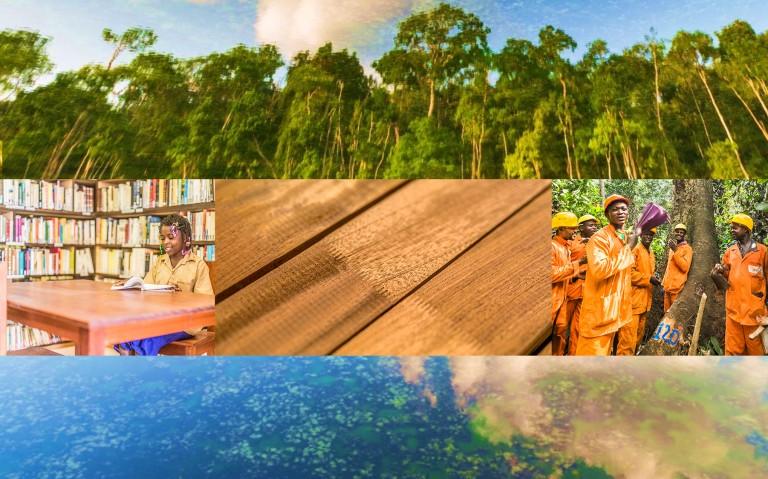La deforestación y la degradación de los bosques no son negociables