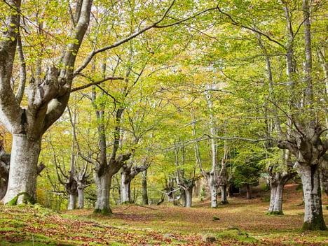 Una cooperativa de propietarios forestales apuesta por las especies autóctonas
