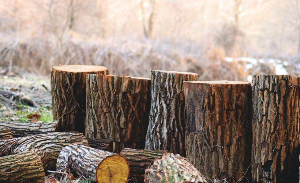 La madera: un recurso renovable y sostenible para la recuperación de la Unión Europea