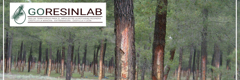 GO-RESINLAB, un laboratorio experimental para mejorar el aprovechamiento de la resina